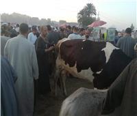 تحصين 257 ألف رأس ماشية ضد الحمى القلاعية بالدقهلية