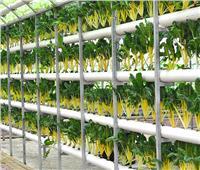 الزراعة تنظم برنامج تدريبي عن«الأمراض المحمولة على بذور المحاصيل الزراعية»