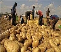 حصاد 2019| صادرات مصر الزراعية 5.4 مليون طن والبطاطس والموالح في المقدمة