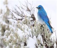 أفضل 20 صورة للطيور في الشتاء من جميع أنحاء العالم