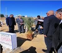 وزير الشباب والرياضة يستهل زيارته للوادي الجديد بـ«زراعة نخلة»