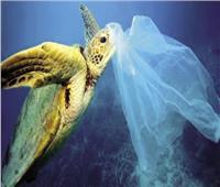 تايلاند تبدأ العام الجديد بحظر الأكياس البلاستيكية في المتاجر