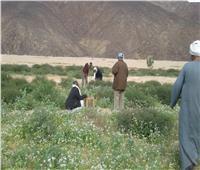 تعرف على إجراءات «الزراعة» لرصد ومكافحة الجراد الصحراوي خلال الشتاء