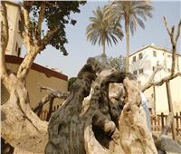 صور| مرت بـ8 محافظات.. تعرف على خط سير العائلة المقدسة في مصر