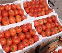 زيادة كبيرة مرتقبة في أسعار الطماطم.. اعرف الحقيقة