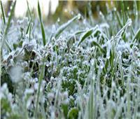 لمواجهة الطقس البارد.. نصائح للمزارعين للحفاظ على المحاصيل
