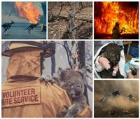 صور| تهدد أكثر من 100 مليار حيوان.. كوارث بيئية في انتظار العالم بسبب حرائق استراليا