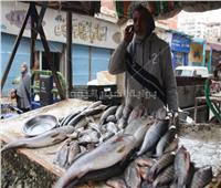 شاهد  تجار سوق السمك بالإسماعيلية: الانتقال للمكان الجديد «مكلف»