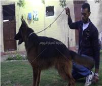 فيديو| مرض معدي خطير يقتل الكلاب.. تحذيرات ونصائح لأحد المتخصصين