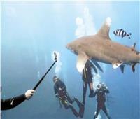 التحرش بأسماك القرش.. أزمة تهدد حياة الغواصين في جزيرة الأخوين