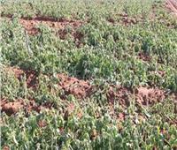 حقيقة تلف المحاصيل الزراعية تأثراً بالتغيرات المناخية