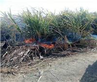 النيران تلتهم نصف فدان من القصب بقنا