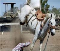 حصان هائج يُصيب 6 أشخاص في قنا وضبط صاحبه
