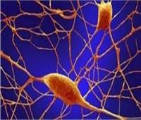 دراسة: الخلايا تدافع عن نفسها عن طريق التماسك