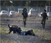 إطلاق كلب بوليسي ضد معتقل فلسطيني قاصر