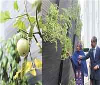 مصرى يصمم بيتًا صديقًا للبيئة بأمريكا.. والأمم المتحدة تتبنى مشروعه
