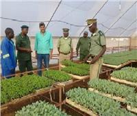 «الزراعة»: التوسع في إنتاج تقاوي المحاصيل بالمزارع الإفريقية المشتركة