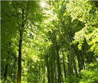 «الزراعة» تستعرض إستراتيجية التنمية المستدامة حول التشجير في مصر