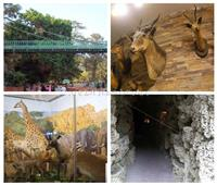 من «كوبري إيفل» لـ«الكشك الياباني»  أماكن لا تعرفها بحديقة الحيوان «فيديو»