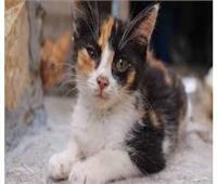 للتحريض على تسميم القطط.. تحويل عضوة بنادي الصيد للتحقيق