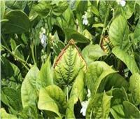 «الزراعة» تنظم برنامجا تدريبيا حول أمراض المحاصيل الحقلية والبستانية
