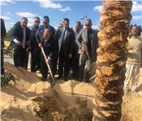 صور  وزير التنمية المحلية يزرع نخلة بمسار العائلة المقدسة بالبحيرة