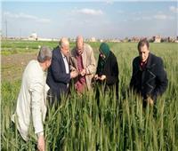 الزراعة تطمئن على محصول القمح بمحافظتي القليوبية والشرقية