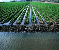 الأبحاث والأصناف الجديدة.. طريق «الزراعة» لمواجهة «التغيرات المناخية»