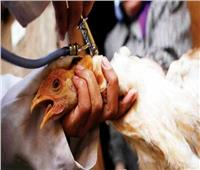السعودية تبلغ عن أول تفشٍ لسلالة شديدة العدوى من إنفلونزا الطيور