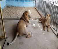جامعة قناة السويس تكشف تفاصيل إنشاء حديقة حيوان جديدة بداخلها