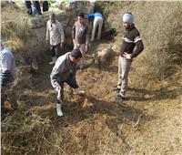 إزالة 5 آلاف متر حشائش بمنطقة أبو مينا الأثرية بالإسكندرية