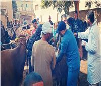 صور| الزراعة تنظم قوافل بيطرية في بني سويف لدعم صغار المربيين
