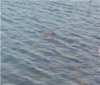مصرع طفل غرقا في مركز بدر بالبحيرة