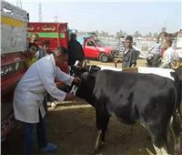 «الزراعة» بدء حملات التحصين ضد مرض «الجلد العقدي» بالمحافظات