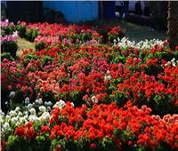 «الزراعة» تقرر إقامة معرض زهور الربيع في دورته الـ 87 بحديقة الأورمان
