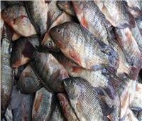 ضبط ربع طن أسماك فاسدة قبل طرحها للمواطنين بالإسماعيلية