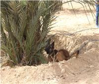 صور| «الزراعة»: الاكتشاف المبكر لسوسة النخيل الحمراء بواسطة الكلاب المدربة