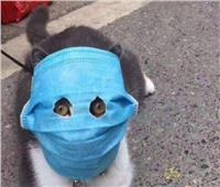 خوفا من كورونا.. الصينيون يضعون أقنعة وقائية على وجوه القطط