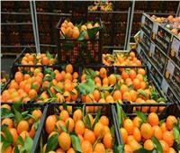 فيديو| الزراعة: مصر تحتل المركز الأول في تصدير الموالح