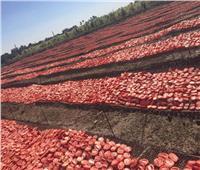 صور| الزراعة تعلن عن مشروع تجفيف الطماطم بالتعاون مع برنامج الغذاء العالمي