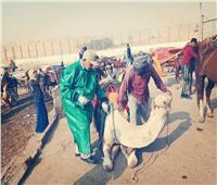 صور| «الزراعة» تنظم قافلة بيطرية لخدمة أهالي نزلة السمان بالهرم