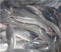 إصابة ٥ أشخاص من أسرة واحدة بالتسمم نتيجة وجبة «قراميط» بالبحيرة