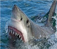 برد فعل غريب| مُسن ينجو بحياته من فك سمكة القرش