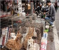 بسبب كورونا.. الصين تمنع الاتجار في الحيوانات