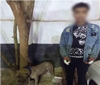 حبس طالب أطلق كلبًا على رجل وزوجته في مشاجرة بالزاوية الحمراء