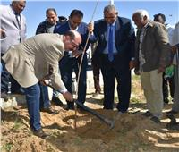 «حنجملها».. مبادرة تستهدف زراعة 9 آلاف شجرة «موالح» بأسوان
