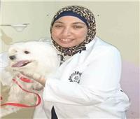 «البارفو» شبيه «كورونا».. مرض خطير يهدد الكلاب
