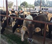 فيديو| الزراعة: اللحوم المستوردة آمنة من فيروس كورونا