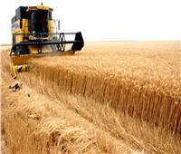 فيديو  بشرى سارة من الزراعة بشأن محصول القمح المصري