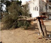 بداية الطقس السيئ.. الرياح تسقط الأشجار في الغربية والمحافظة ترفع استعداداتها
